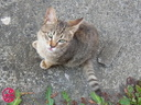 子猫の写真